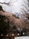 靖国神社のガッちゃんです。